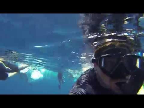 Wild Dolphin Adventure Mazatlán | Nado con delfines libres | oncaexplorations.com