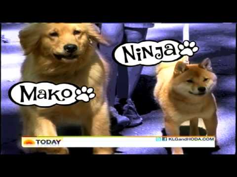 Puptopia NYC Dog Walking Service on the Today Show