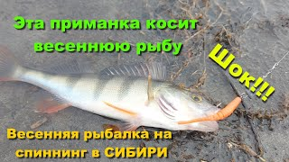 Шок!! Эта приманка косит весеннюю рыбу. Весенняя рыбалка на спиннинг в СИБИРИ. Рыбалка 2021