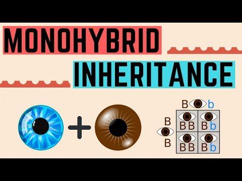 IGCSE BIOLOGY REVISION [Syllabus 17] - Monohybrid Inheritance