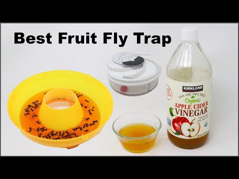 In Search Of The Best Fruit Fly Trap  -  Mousetrap Monday