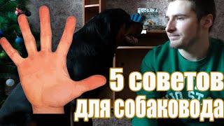 5 ЛУЧШИХ советов для Начинающих Собаководов