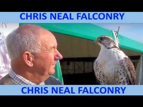 CHRIS NEAL FALCONRY - originally titled . . . .