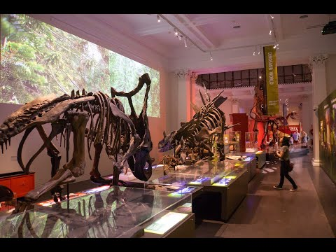Trip to Sydney's Australian Museum Jan 2021 (reopened after a renovation)