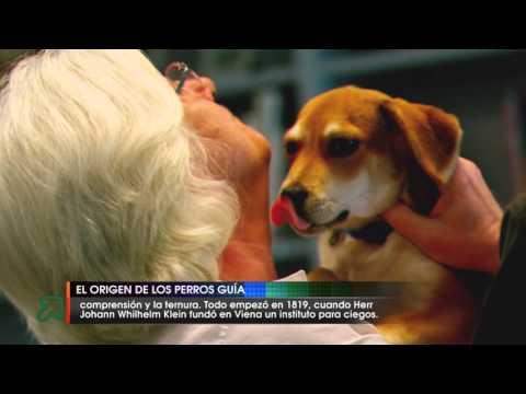 El origen de los perros guía
