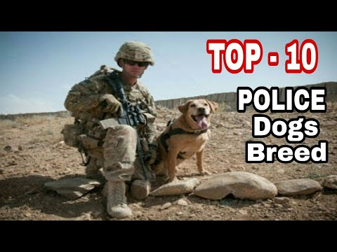 TOP-10 Best Police Dog Breed In The World / Intelligent dog breeds / Aryan Dog Club  Aryandogclub