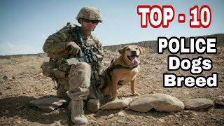 TOP-10 Best Police Dog Breed In The World / Intelligent dog breeds / Aryan Dog Club  Aryandogclub