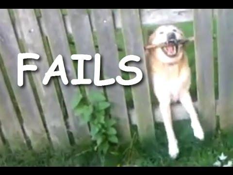 Good Funny Canine Adorable Dog - hqdefault  Pictures_949617  .jpg