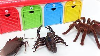Thomas, Disney Cars, Tayo, Cockroach Monster Story