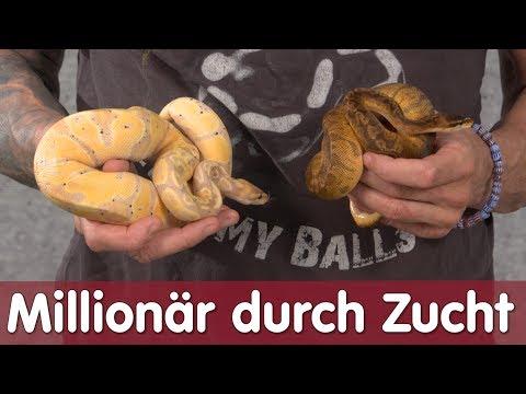 Reptil TV - Folge 103 - Millionär durch Ballpython Zucht