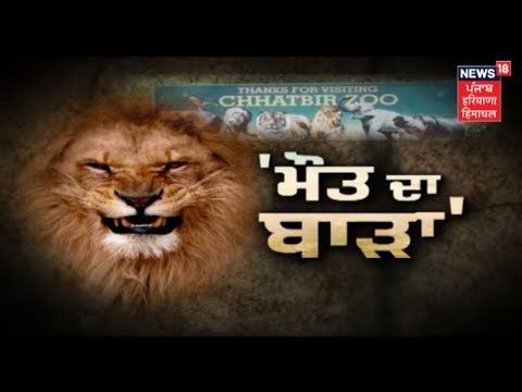 Man Mauled to Death by Lions at Chhatbir Zoo in Chandigarh