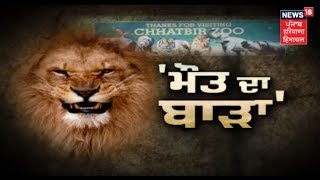 Download Video Man Mauled to Death by Lions at Chhatbir Zoo in Chandigarh MP3 3GP MP4
