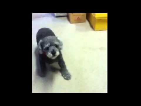 Dog barking at stuffed animal