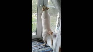 """Кот научился открывать окно """"гаврюша"""""""