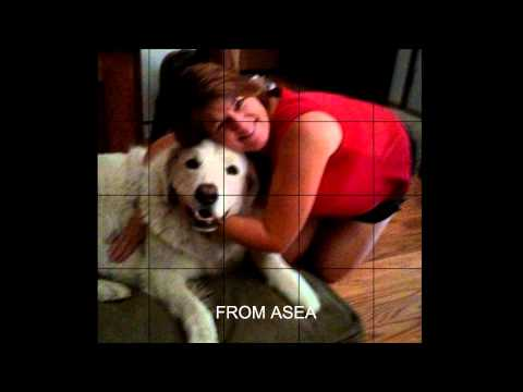 ASEA FOR PETS
