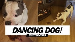 Dog's Happy Dance For Food! | Viral on Twitter!
