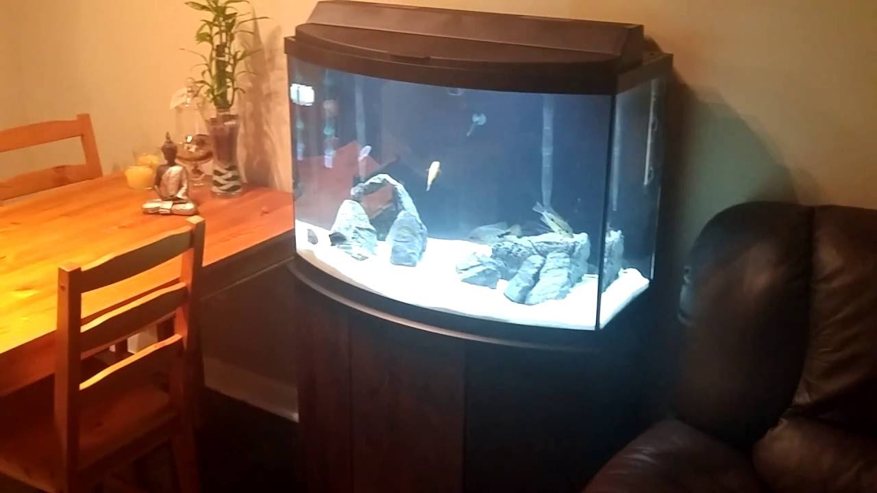 Aqueon 36 Gallon Bow Front Aquarium Ensemble 1000
