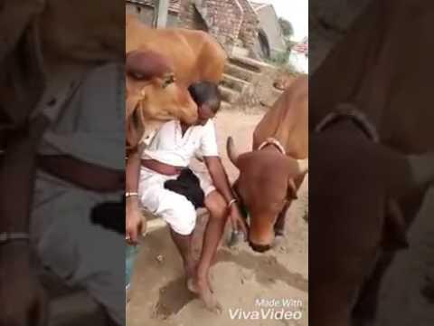 Sabhal mara kaliya Thakar moj Maldhari ni