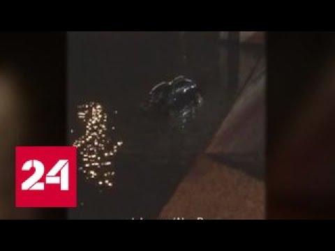 В Москва-реке утонула иномарка