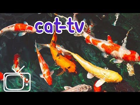 CAT-TV - Boredom Blasting Fish Videos for Cats!
