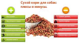 Сухой корм для собак: плюсы и минусы.