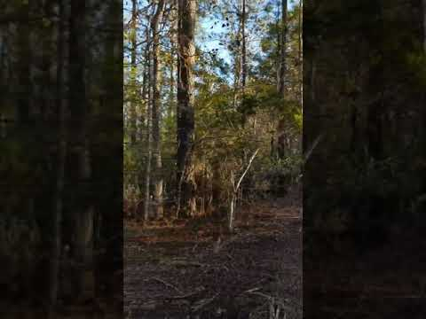 Off SR 1900/Canady Landing Road Aurora, NC 27806-Rural Land For Sale In Beaufort County, NC