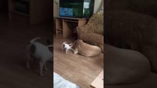 Собаки любят друг друга