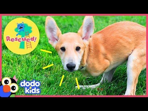 Joey The Dog Hops Just Like A Kangaroo! | Animal Videos For Kids | Dodo Kids