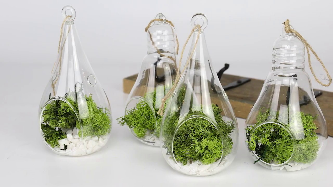How To Make Your Own Hanging Glass Terrarium Youtube