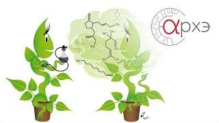 """Инна Гутерман: """"О чём пахнут растения"""""""