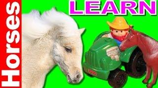 Farm Heroes Real horses animals for kids joe macdonald live animals horses footage toys