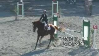 2010年11月7日に群馬県馬事公苑で行われた「秋季群馬県馬術大会...