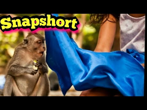 HD Photos Taken At The Right Moment | Amazing Pictures 2018 | funny Photos
