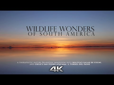 """Wildlife Wonders of South America"" 4K RELAXATION VIDEO Chile & Bolivia (Nature Sounds Only)"