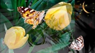 Любовь закружит нас гр Весна