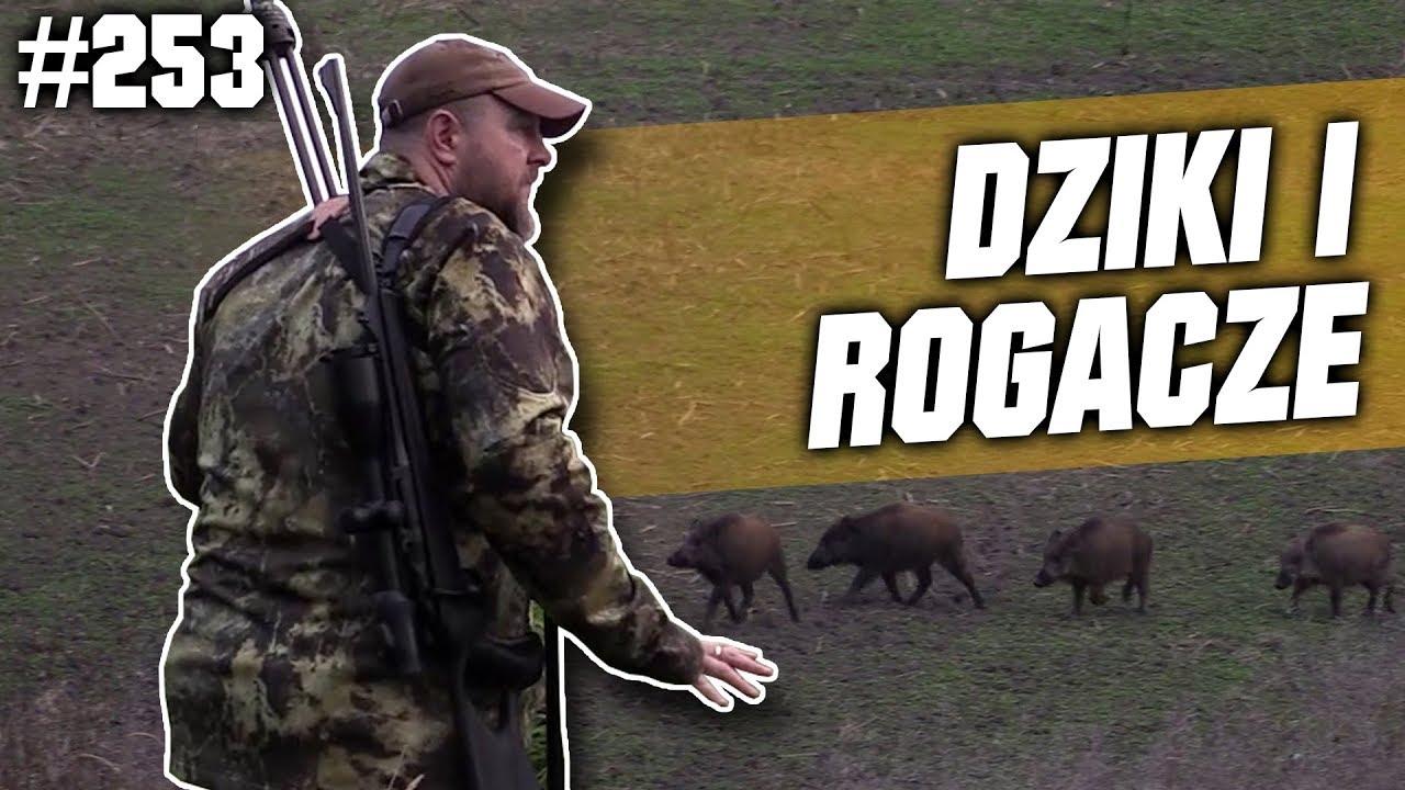 Darz Bór odc 253 – Dziki i rogacze