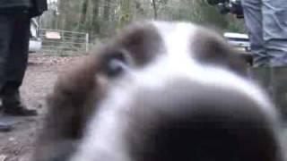 Meet Dorset's Search Dogs