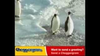 ха-ха-ха, пингвин дает, полный ржачь, смешное видео