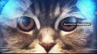 Классное приложение где можно скачать красивые картинки котов!