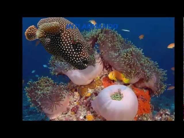 VIDA BAJO EL MAR Life under the sea 海下的生活