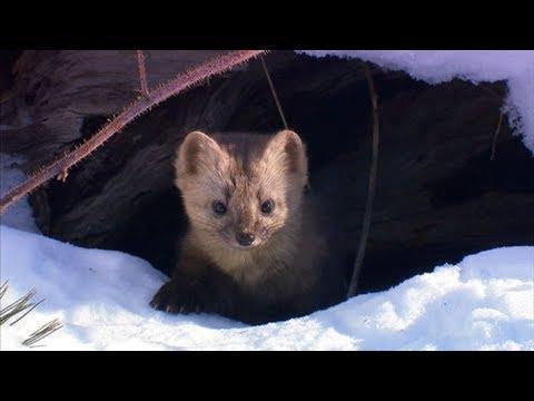 Siberia. Wild Russian Nature. Nat Geo Wild