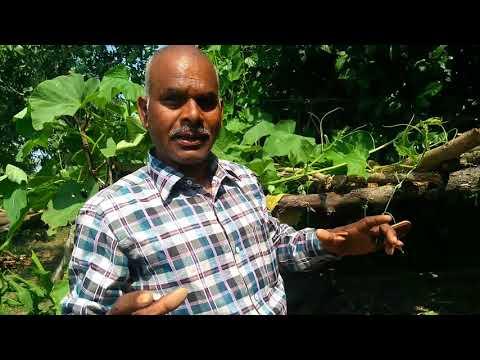 Duryodhan Bhaware Director Mandla Organic