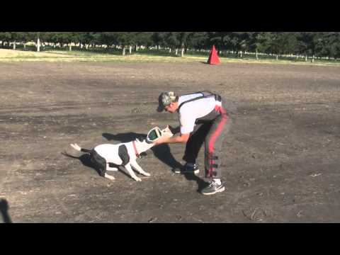 Bite Wedge Jute Tug Toy: Schutzhund & Police K9 Equipment