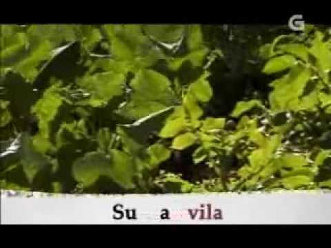 Bem Falado - Prefixos Sob- e Sub-