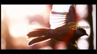 Litfiba-Apapaia + testo