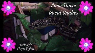 All Talk No Bite Is Sia My Diamond Python