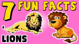 7 FUN FACTS ABOUT LIONS! LION FACTS FOR KIDS! Roar! Africa! Cats! Learning Colors! Funny Sock Puppet