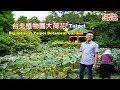 [台北自由行花季景點攻略] 植物園的荷花開了,台北市區最便利的賞花景點不用跑到郊區了