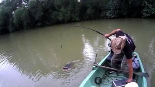 CATFISHING-2 m sumec na vábničku JP- zdolávačka / 2 metres catfish on the clonk JP - Challenge