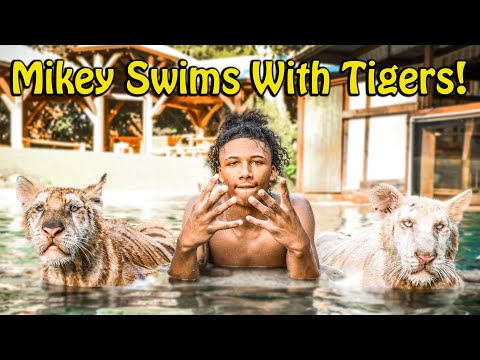 Mikey Williams Swims with Tigers and More !   Myrtle Beach Safari